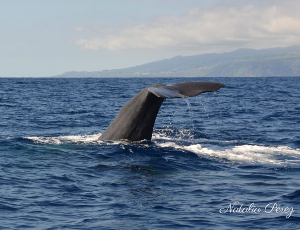Whale Watching (1)