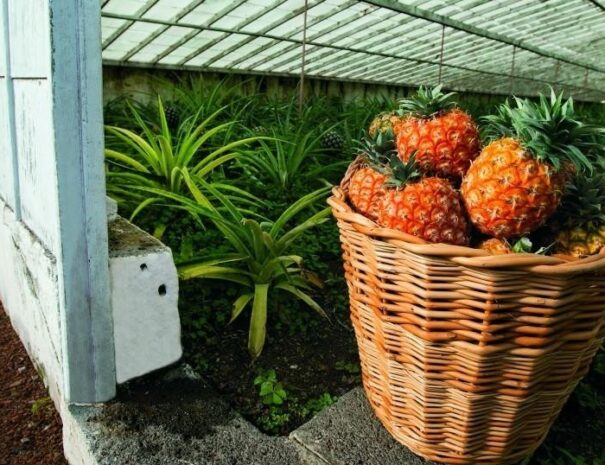 Pineapple-1024x696